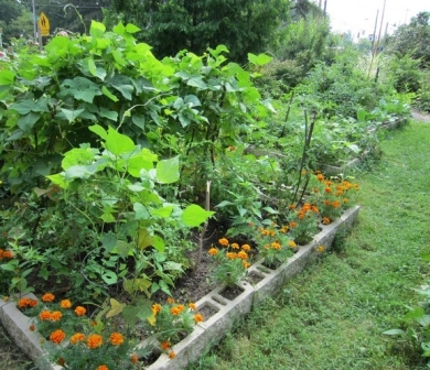 Community Garden Coming to Altoona in May 2014